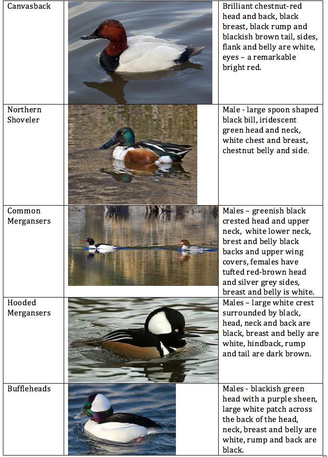 Birding101 - 2