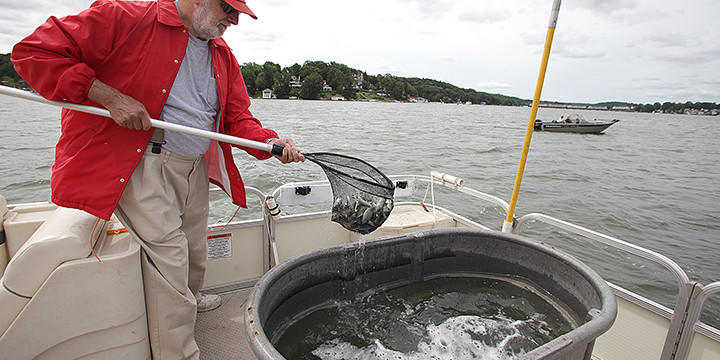 Fish from hackettstown hatchery stocked in lake hopatcong for Lake hopatcong fishing