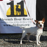 Jillian, a two-year-old terrior mix is available for adoption from 11th Hour Rescue.
