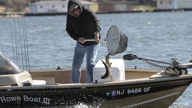 Rich Everett, a Knee Deep Club member, dumps trout into Lake Hopatcong.