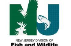 NJFish&Wildlife