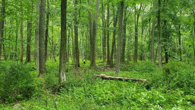 roxbury-trail-approval-waiting